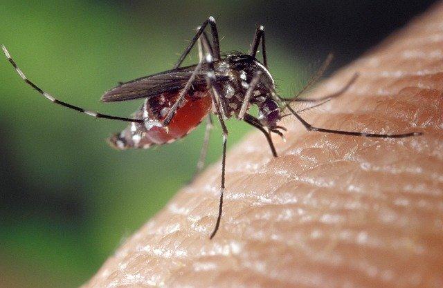recette anti-moustiques